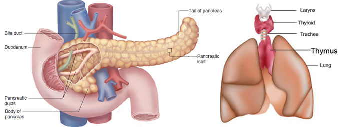 Pancreatic  and Thymus  Surgery